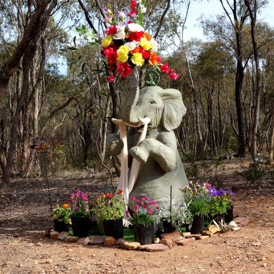 Elephant making offerings to Great Stupa of Universal Compassion, Bendigo, Asutralia, October 2014. Photo by Ven. Roger Kunsang.
