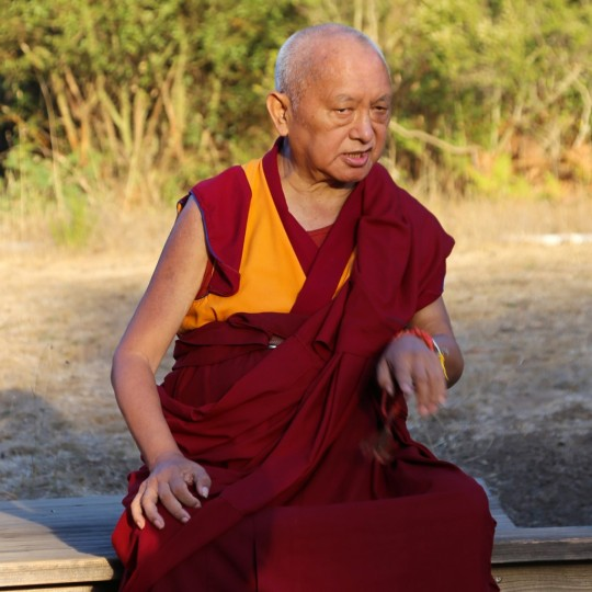 Lama Zopa Rinpoche in the meadow at Land of Medicine Buddha, Soquel, California, October 2015. Photo by Ven. Thubten Kunsang.