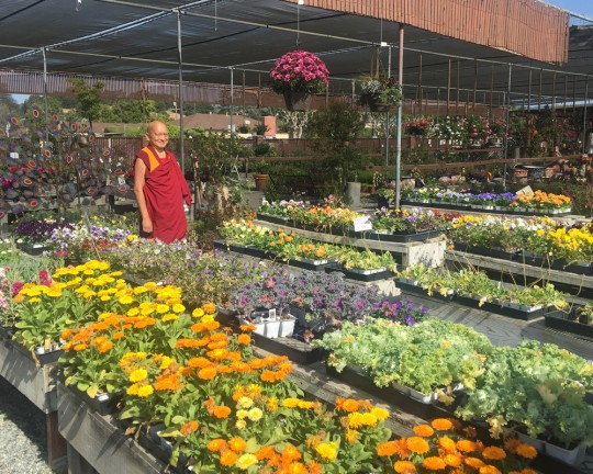 Lama Zopa Rinpoche shopping for flower offerings at a plant nursery, California, US, October 2015. Photo by Ven. Roger Kunsang.