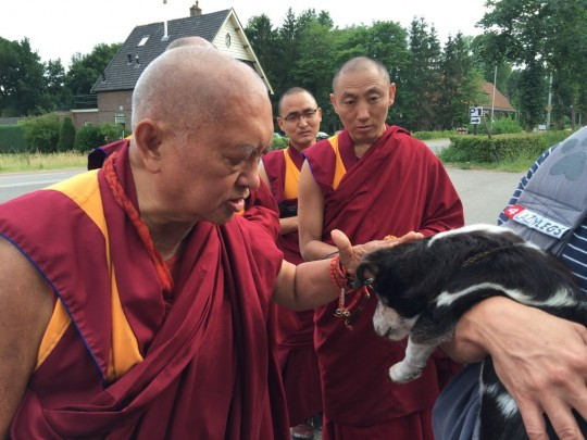 Lama Zopa Rinpoche blessing a Dutch student's 17-year-old dog, the Netherlands, July 2015. Photo by Ven. Thubten Kunsang.