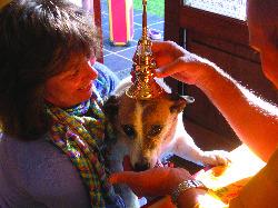 C6 Animal blessing
