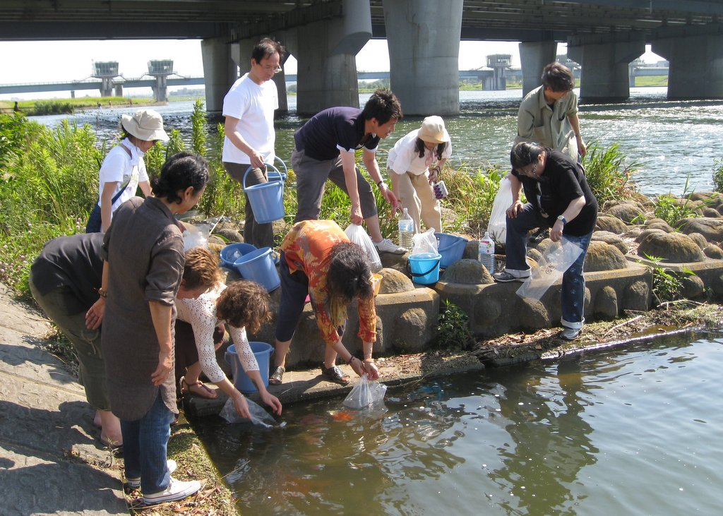 DNSJ student liberating fish, Tokyo, July 2013. Photo courtesy of Doc O'Connor.