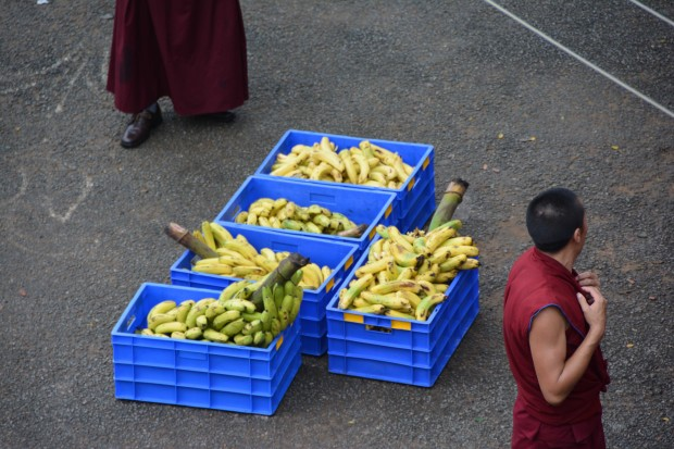 The Sera Je Food Fund offers nutritious foods, like bananas, to 2,500 monks at Sera Je Monastery. Photo courtesy of Sera Je Food Fund.