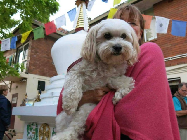 Animals were blessed on World Animal Day at Vajrayana Institute's stupa, October 1013. Photo courtesy of Enlightenment for the Dear Animals.