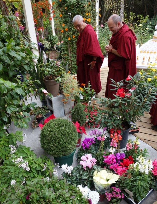 Rinpoche in after a trip to the local garden shop directing where the flowers go in the gardens of Kachoe Dechen Ling to be beautiful offerings to all the gurus, buddhas and bodhisattvas and holy beings! Aptos, California, November 17, 2013. Photo by Ven.Roger Kunsang.