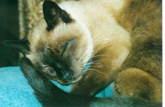 Max sleeping. Photo courtesy of Phil Hunt.