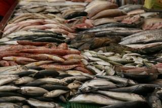 Fish from many regions at a wet market in Singapore