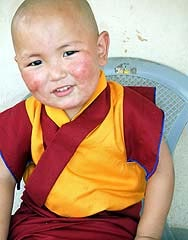 Tulku Tenzin Phuntsok Rinpoche. Photographer Ven Tenzin Zopa