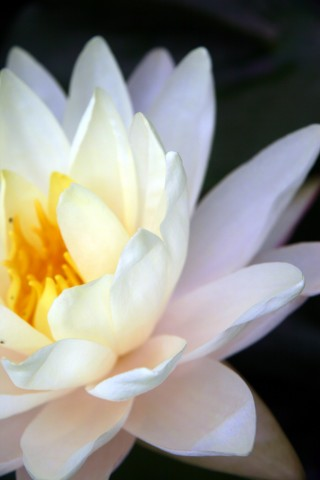 http://www.dreamstime.com/stock-photos-lotus-image1390773