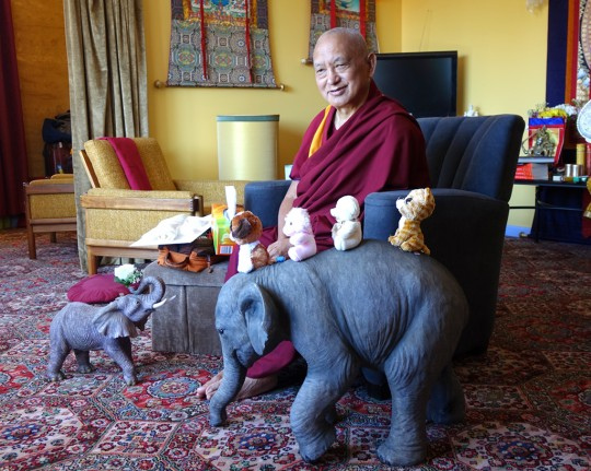 Lama Zopa Rinpoche in his room at Thubten Shedrup Ling, Australia, October 2014. Photo by Ven. Roger Kunsang.
