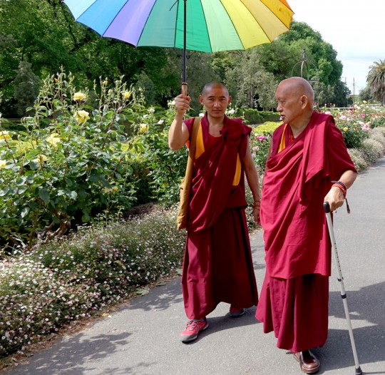 Lama Zopa Rinpoche visiting a park in Bendigo, Australia, October 2014. Photo by Ven. Roger Kunsang.