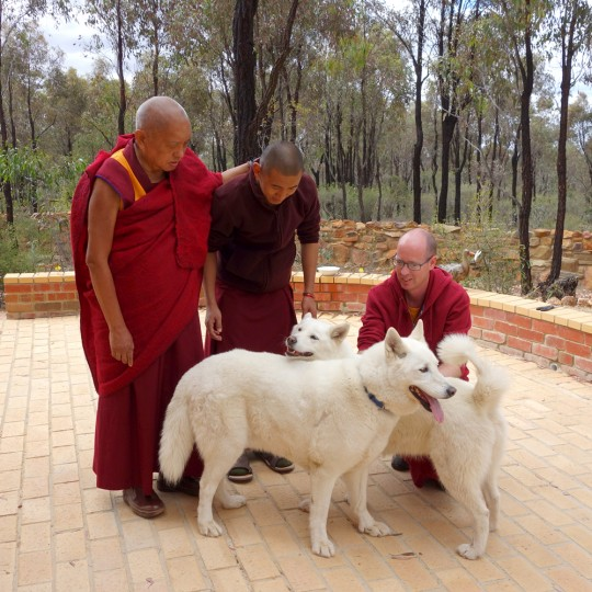Rinpoche blessing dogs at Thubten Shedrup Ling Monastery, Bendigo, Australia, October 2014. Photo by Ven. Roger Kunsang.