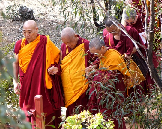 Lama Zopa Rinpoche with Geshe Doga and Khen Rinpoche Geshe Chonyi returning to Thubten Shedrup Ling from the Great Stupa of Universal Compassion while being mindful of the ants, Australia, September 2014. Photo by Ven. Roger Kunsang.