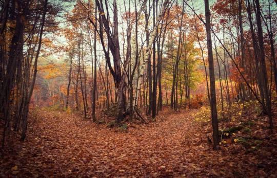 Milarepa Center landscape, Barnet, Vermont, October 2014. Photo by Linda Bryan.