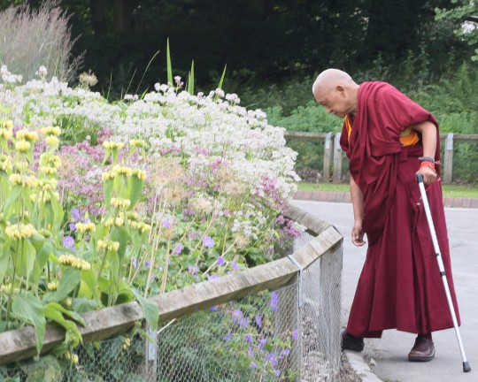 Lama Zopa Rinpoche on a garden walk, UK, June 2014. Photo by Ven. Thubten Kunsang.