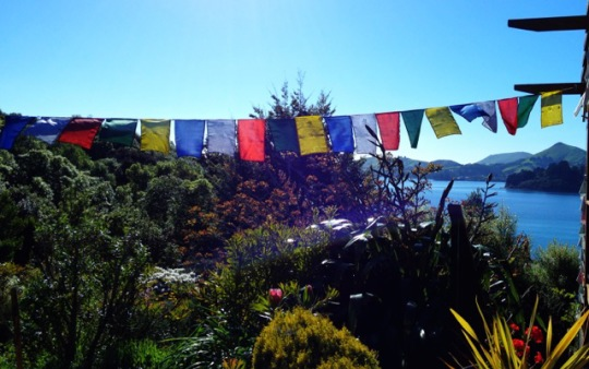 Martine Darrou's garden in Dunedin, New Zealand