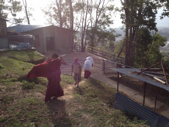 Kopan monks moving feed for the animals at the Animal Liberation Sanctuary, Kathmandu, Nepal
