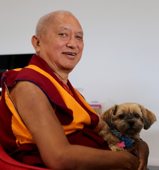 Lama Zopa Rinpoche and a cute canine friend,  Adelaide, Australia, May 2015. Photo by Ven. Thubten Kunsang.