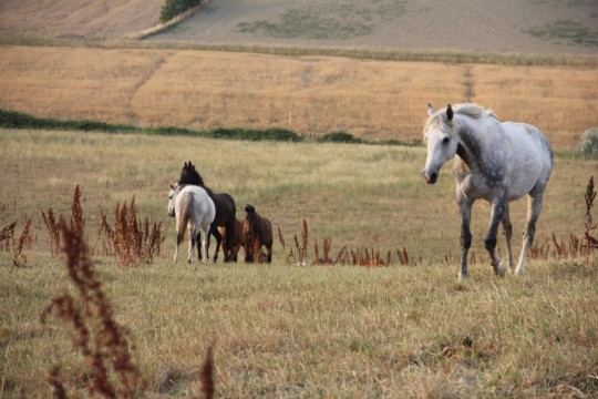 Although these retired race horses are perfectly healthy, they were slotted to be put to death due to them no longer being considered valuable. Photo courtesy of Aquila Nera.