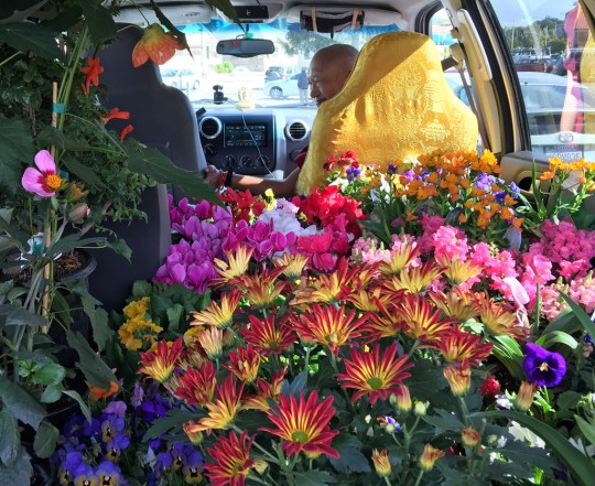 "Lama Zopa Rinpoche after a trip to the plant nursery, California, US, October 2015. Ven. Roger Kunsang, who took the photo shared, ""The car is completely full of flowers, even on the roof. Rinpoche was looking for large yellow flowers (calendulas) symbolizing the heart of Lama Tsong Khapa's teachings."""