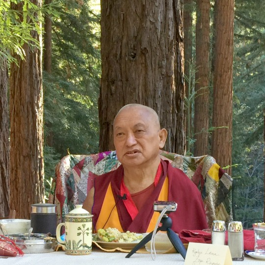Lama Zopa Rinpoche at Vajrapani Institute, California, US, November 2015. Photo by Ven. Roger Kunsang.
