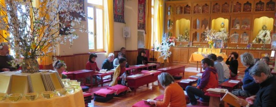 Release recitation of Institut Vajra Yogini's newest French-language edition of the Golden Light Sutra, Marzens, France, March 2015. Photo courtesy of IVY.