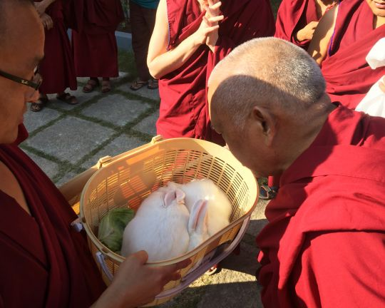 Lama Zopa Rinpoche blessing rabbits at Sera Je Monastery, India, January 2016. Photo by Ven. Roger Kunsang.