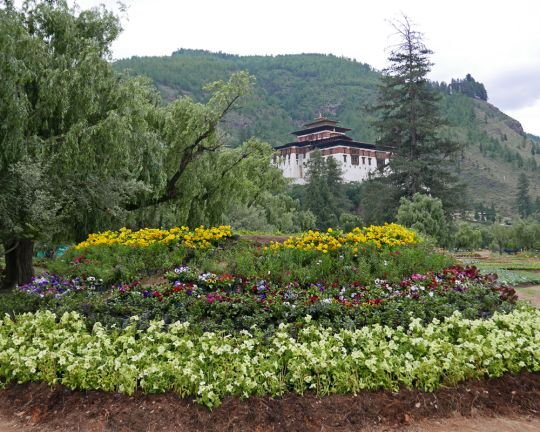 The annual flower exhibition with a view of RinpungDzong in Paro, Bhutan, June 2016. Photo by Ven. Roger Kunsang.