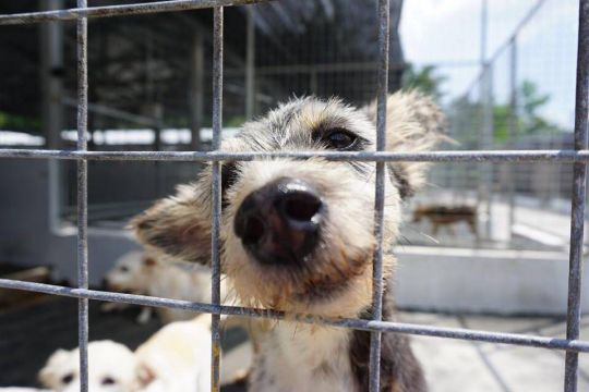 Dogs, like every living being, just want happiness and don't wish to suffer. This dog shelter is helping give the dogs with their basic needs and exposing them to Dharma.