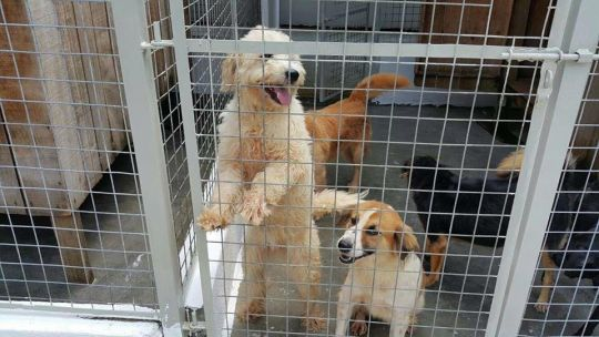 Without support from this shelter, these dogs would surely die or live in miserable conditions on the street.