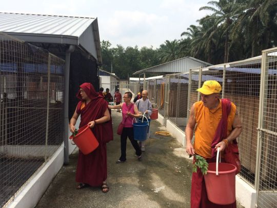 Students of LDC blessing the shelter dogs on Lama Zopa Rinpoche's behalf.