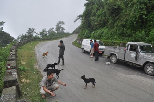 JAST members rescuing the distraught dogs from the side of the road.