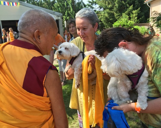Lama Zopa Rinpoche blessing two dogs on the way to teaching, Maitreya Instituut, Loenen, Netherlands, July 2015. Photo by Ven. Roger Kunsang.