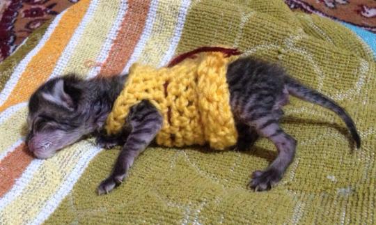 Мало Tamdrin носить пальто из ее вен. Lekden.