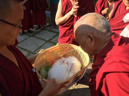 lama zopa blessing rabbits