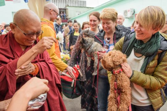 lama zopa rinpoche blessing dogs