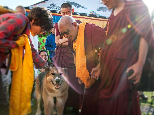 Lama-Zopa-Blessing-Dog