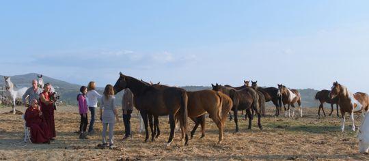 lama-zopa-rinpoche-blessing-horses