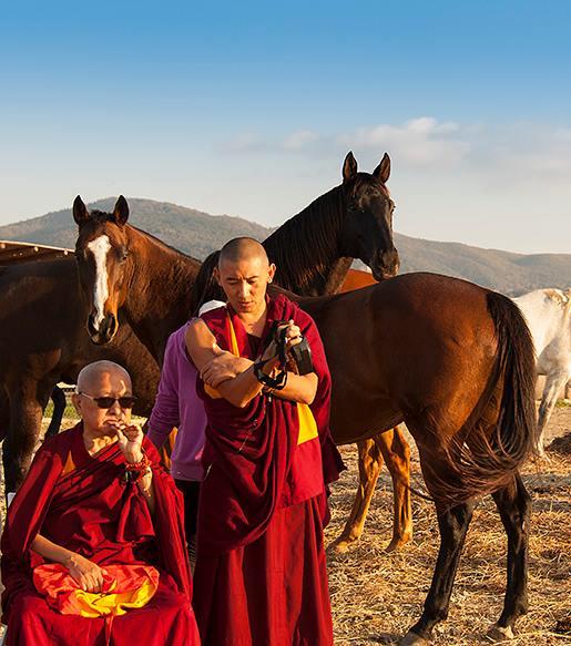 lama zopa rinpoche horse aquila nera piero sirianni