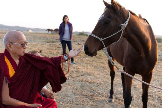 lama-zopa-blessing-horse-italy