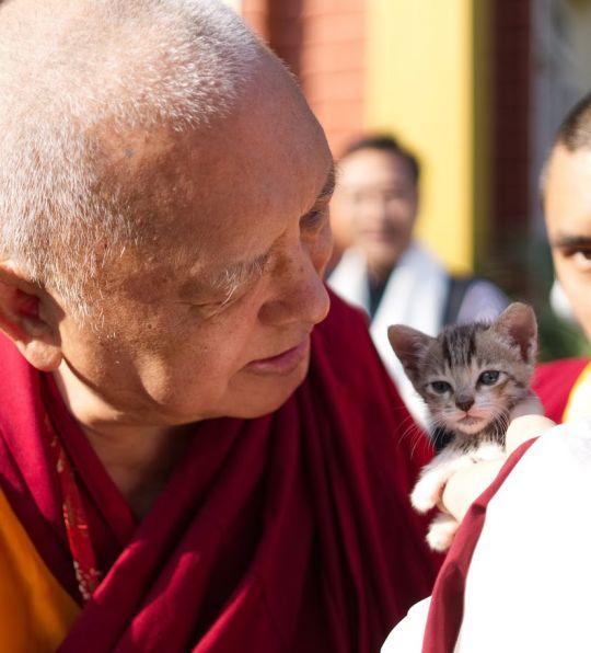 lama-zopa-rinpoche-blessing-kitten