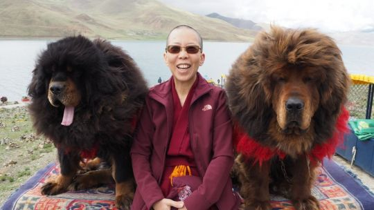 Ven. Tenzin Tsultrim partakes in a souvenir photo session with two Tibetan mastiffs beside Yamdrok Lake, en route to Shigatse, Tibet, June 2017. Photo courtesy of Ven. Tenzin Tsultrim.
