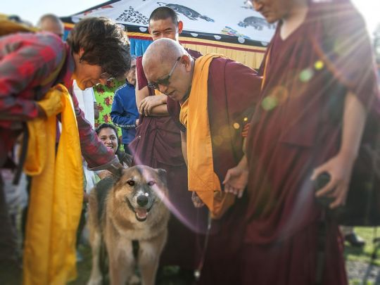 Lama Zopa Rinpoche blessing a dog at ILTK in Italy Oct 2017