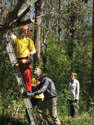 william-calhoun-working-the-chainsaw-while-a-member-of-the-wilmington-mormon-team-and-patrick-mcginity-hold-the-ladder-in-north-carolina-on-october-13-2018-photo-courtesy-of-kadampa-center
