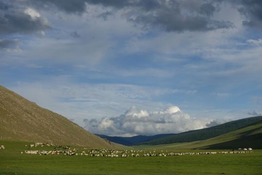 a-valley-with-grazing-animals-and-blue-sky-with-clouds-in-mongolia-while-on-a-pilgrimage-organized-by-ganden-do-ngag-shedrup-ling-august-2018-photo-by-ianzhina-bartanova
