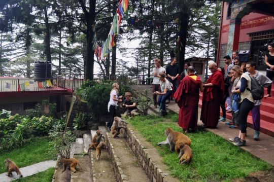 lama-zopa-rinpoche-offering-blessings-to-the-monkeys-at-tushita-dharamsala-september-2018