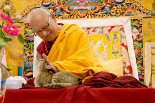 lama-zopa-rinpoche-petting-shamatha-the-cat-at-kopan-kathmandu-nepal-december-2018-by-bill-kane