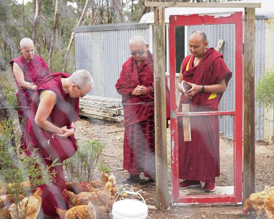 Lama-Zopa-Rinpoche-blessing-chickens-Thubten-Shedrup-Ling-Australia-201804