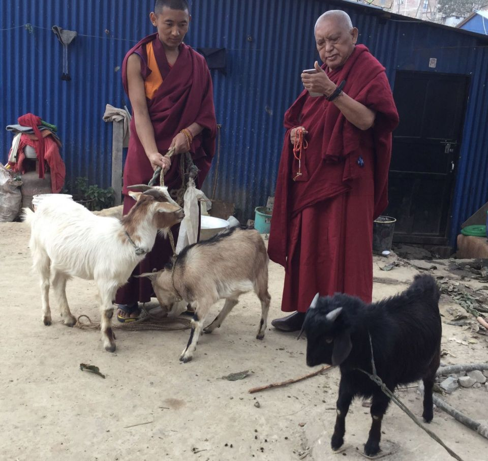 Goats Liberated and Sponsored in Maratika, Nepal