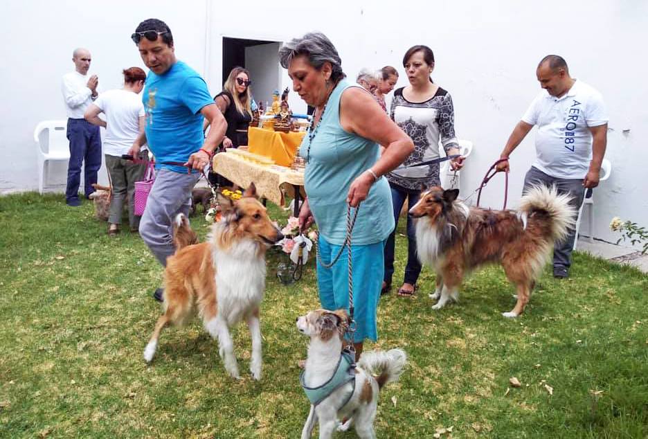 Bengungyal Center Benefited Animals